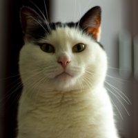портрет друга- от бездомного котёнка-заморыша  на улице  до взрослого, благодарного  кота в доме :: Юрий Шамсутдинов