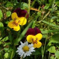 маленькие красавицы :: Heinz Thorns