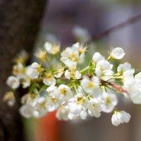Весна :: Вячеслав Дроздов