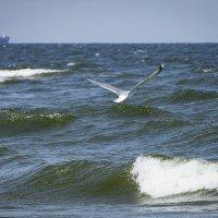 Над морскою над волною :: Виталий Латышонок
