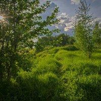 Весенний пейзаж :: Владимир Ефимов