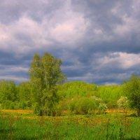 К дождю :: владимир тимошенко