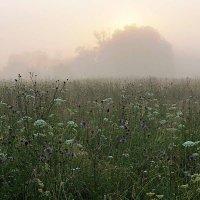 Туманный восход в долине Протвы :: Сергей Курников