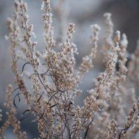 Зимнее утро :: Дмитрий Павлов