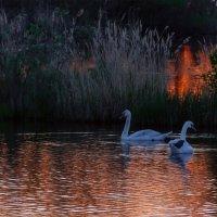 Утро на озере :: Максимка