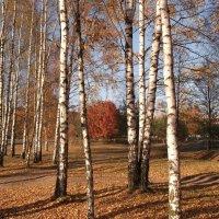 Солнечная осень... :: Анна VL