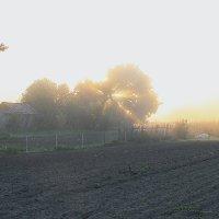 Утро туманное :: Григорий Капустин