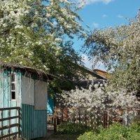 Старый дворик :: Galina Solovova
