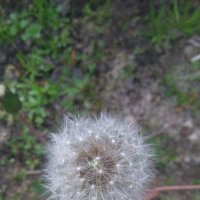 цветы :: ЕР