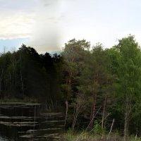 наше болото :: ольга хакимова