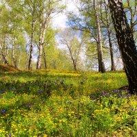 В весеннем лесу :: владимир тимошенко
