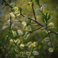Нежность весны :: lady v.ekaterina