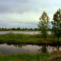 Подкралась тихо непогода... :: Нэля Лысенко