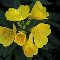 Цветы у дома моего :: Валентин Семчишин