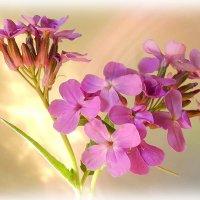 Цветы полевые :: Григорий Капустин
