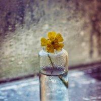 капли и цветок :: Iulia Efremova