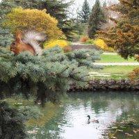 В парке. :: Наташа С