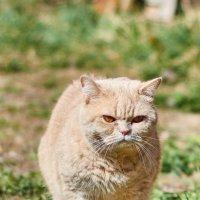 Сурьёзная кошка :: Александр Протопопов