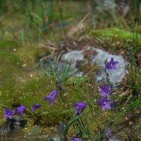 травушка-муравушка :: Оля Минакова