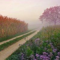 утренний туман :: Elena Wymann