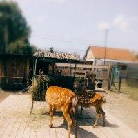 Барнаульский зоопарк :: Елена Горбатова