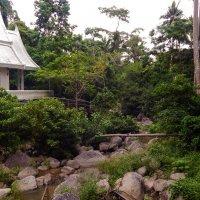Колорит острова Самуи. :: Лариса (Phinikia) Двойникова