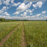 Июньские травы :: Сергей Михайлович