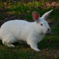 Roger rabbit :: Tim Andrews