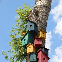 Птичьи домики :: Екатерина