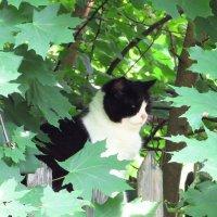 Дремлющий среди листвы :: Андрей Снегерёв