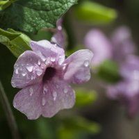 цветочное настроение :: Осень
