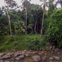Остров Самуи. Джунгли вдоль берега речки. :: Лариса (Phinikia) Двойникова