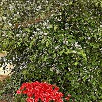 Тюльпаны. :: Виктор Егорович