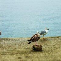 Чайки :: Татьяна Р