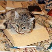 Учёный кот :: толик токарев