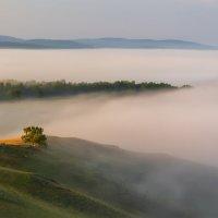 Туманное утро! :: Максимка