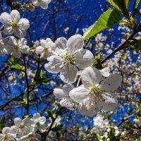 пришла весна-красна! :: жанна