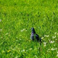 Птичка на отдыхе. :: Александр Горячев