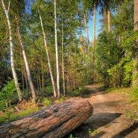Летом в лесу :: Александр Шишин