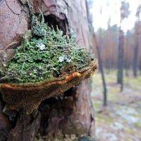 Микромир на дереве :: OlesiaVS .