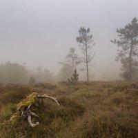 Туман на перевале :: Galina