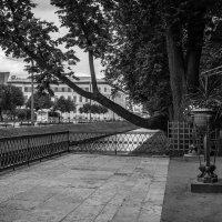 Смотровая площадка Летнего сада. :: Павел Лушниченко