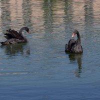 Два лебедя любуются собой... :: Татьяна Иванова