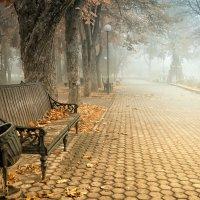 Туманное утро. :: Наталья Остапенко