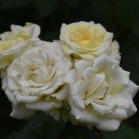 Роза ветров. :: Константин