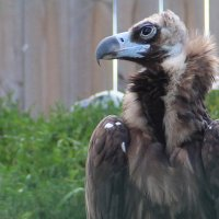 Серьёзный птиц :: Елена Минина