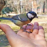 Птица :: Сергей