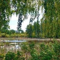 Все оттенки зелёного лета!  ... берёзовый занавес ) :: Елена Хайдукова  ( Elena Fly )