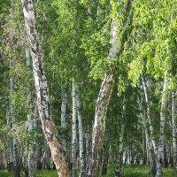 тихо в лесу :: Елена Красильникова