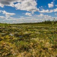 Югорский болотный пейзаж :: Георгий Кулаковский